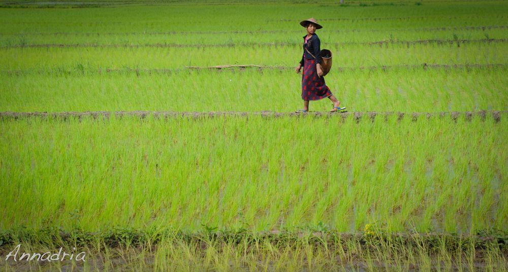 Myanmar by annadria