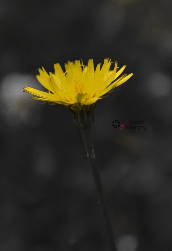 20120822-DSC_8948 by SHANAVAS KT