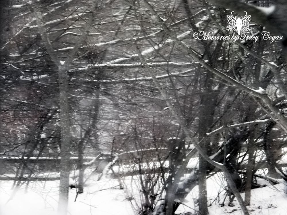 Snow day22 by cogarslionheads