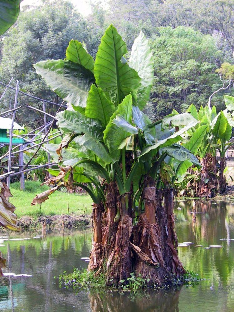 Madagaskar rain forest by Arie Boevé