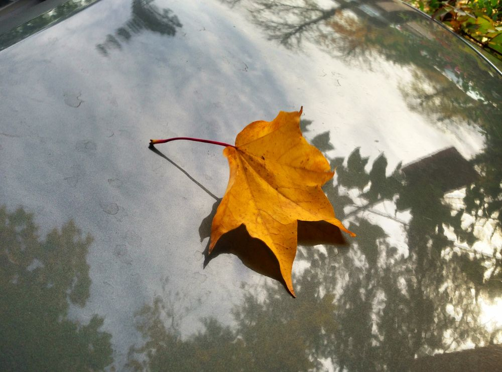 Leaf by AndyHarrison