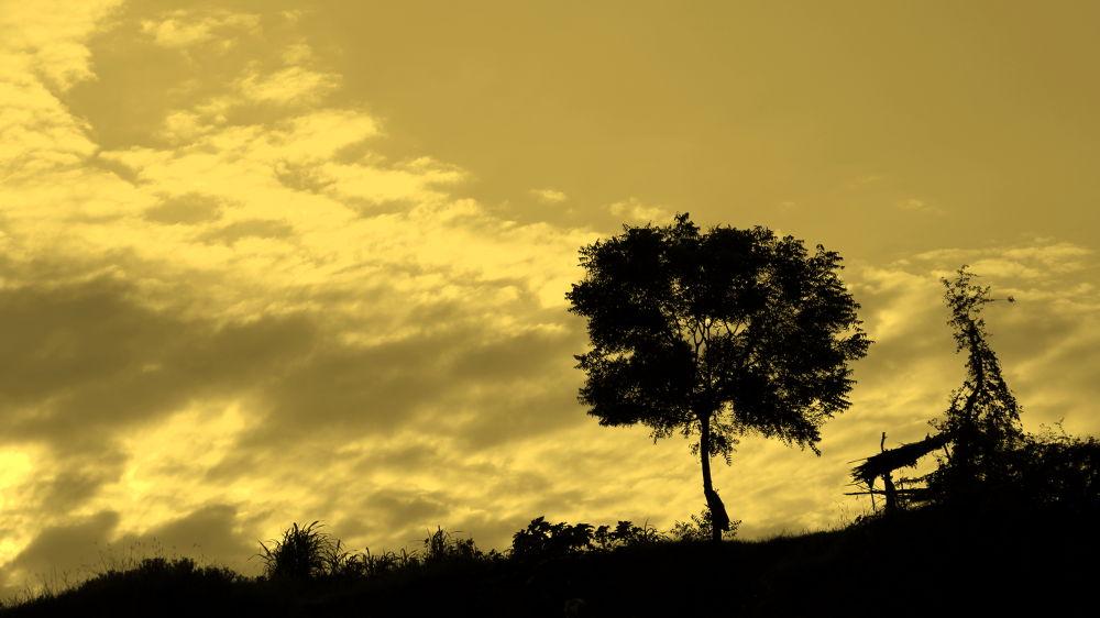 1-IMG_4310-001 by Dhruv Patel