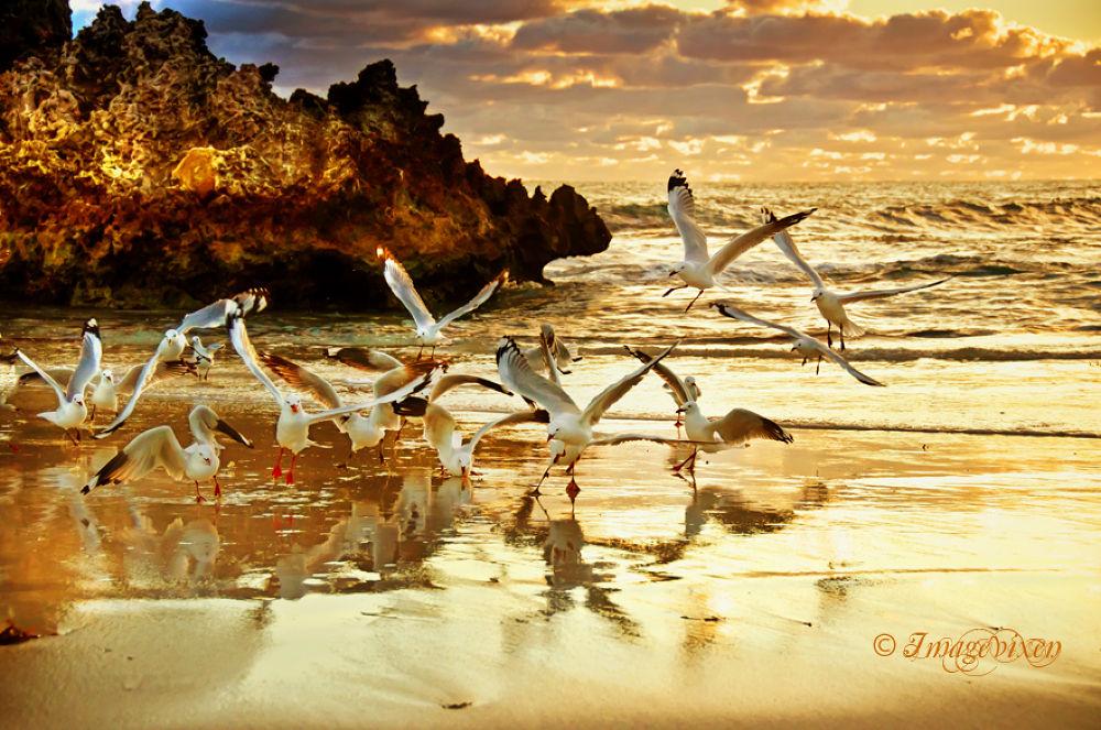 Gulls at Sunset by Imagevixen