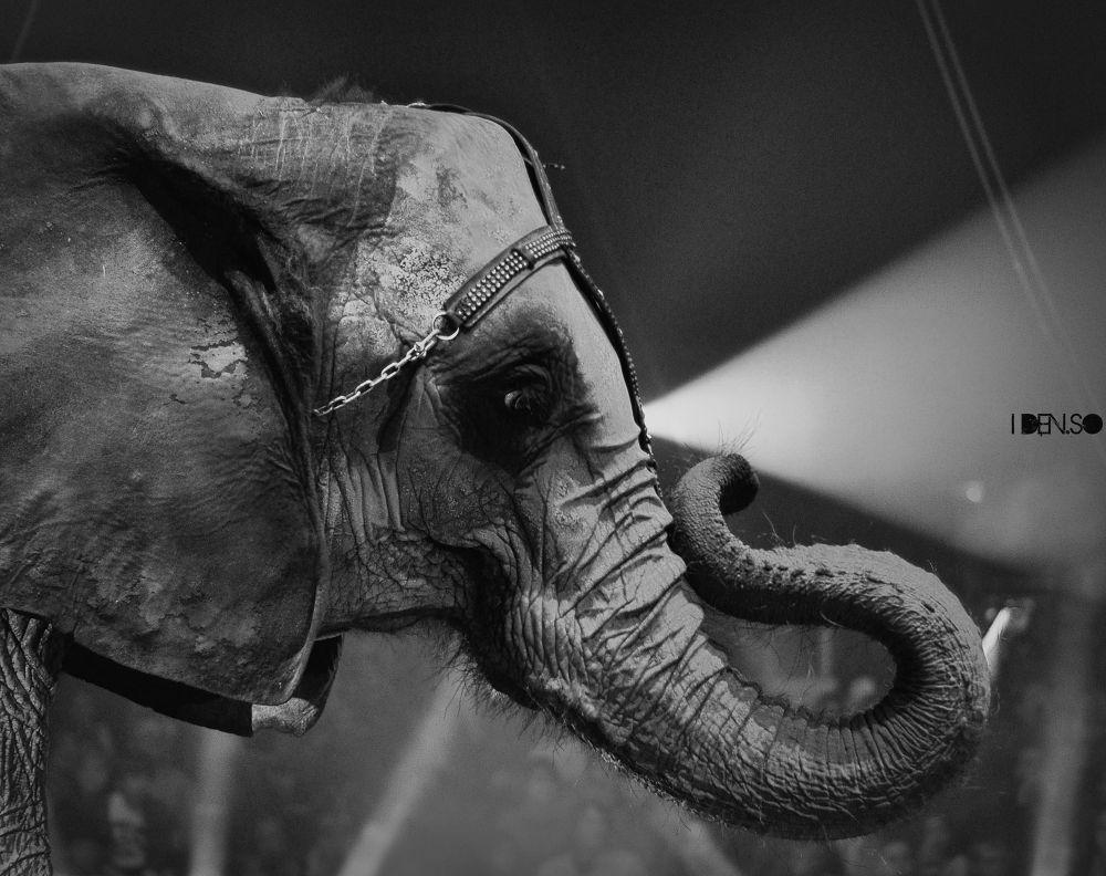 elephant projo by idenso