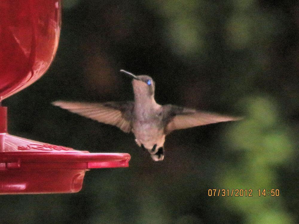 hummingbird 1 by Linda L. Offen
