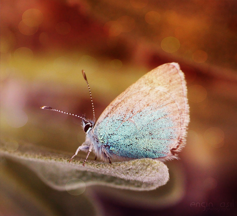butterfly by enginasil
