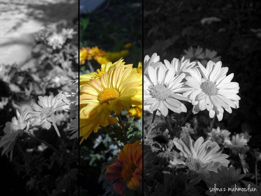 creative flowers by solmaz