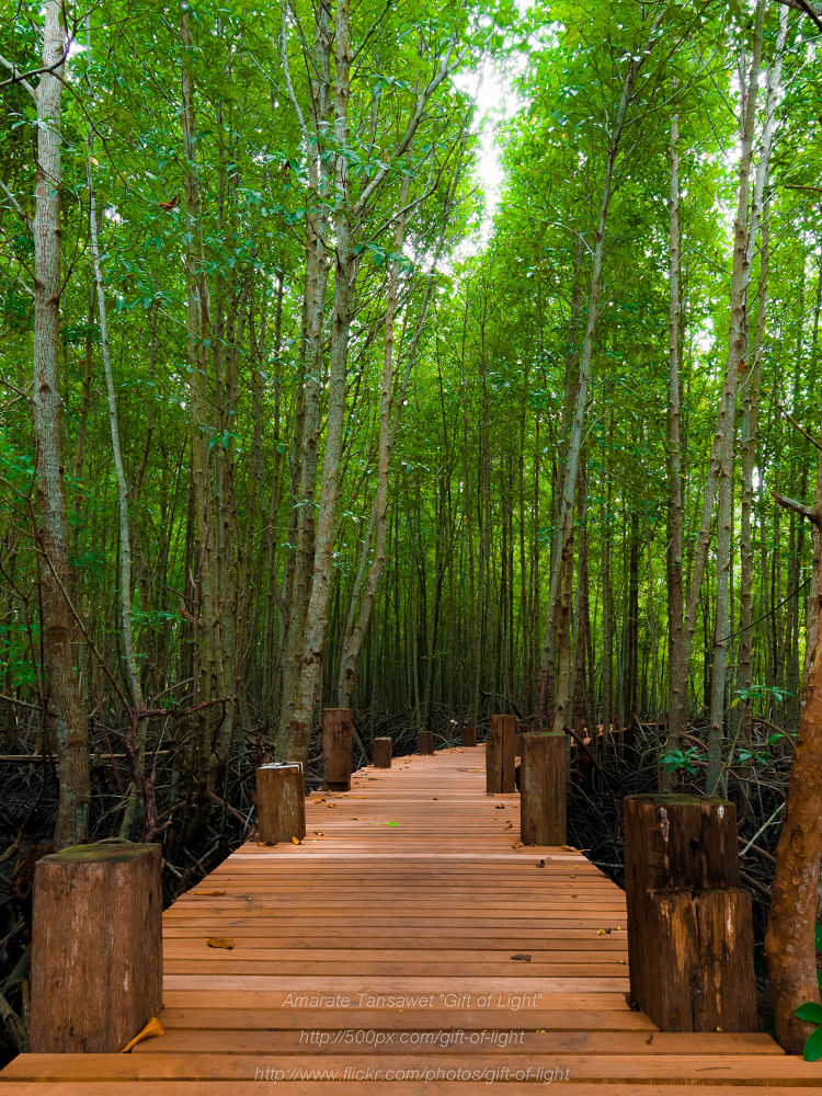 Deep into the mangrove forest by Gift_of_Light