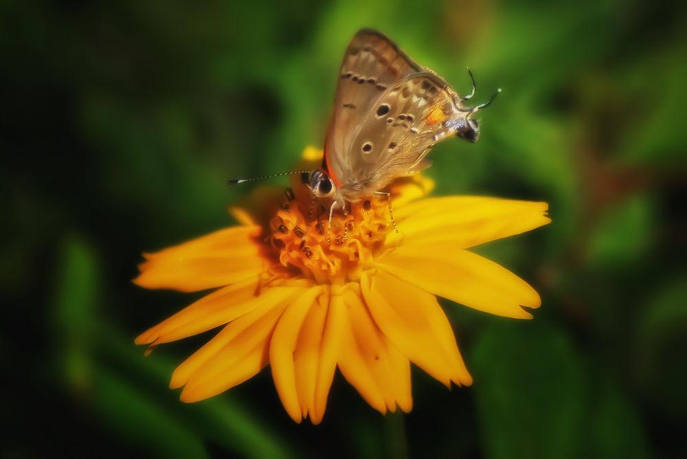 Butterflies (9) by Jorge Coromina