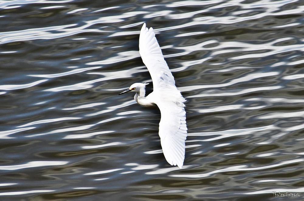 Photo in Random #rio #ave #natureza #passaro