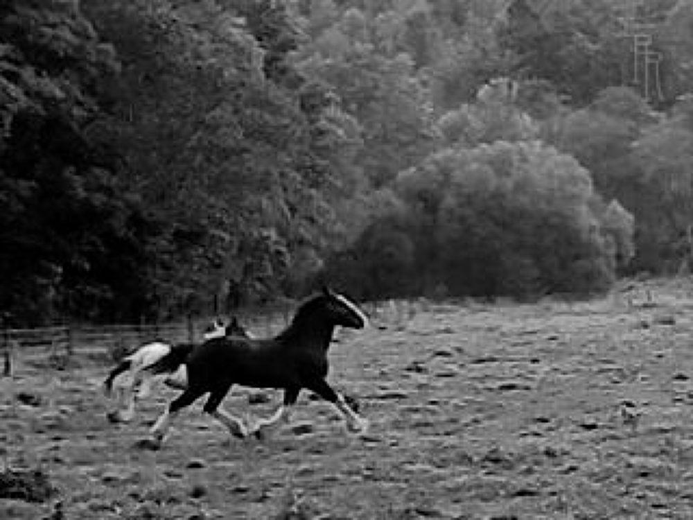 9.15.12--Katies-morning-run-BW-RR by reneeroma