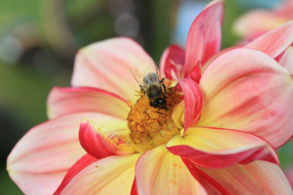 Bee by Roslyn
