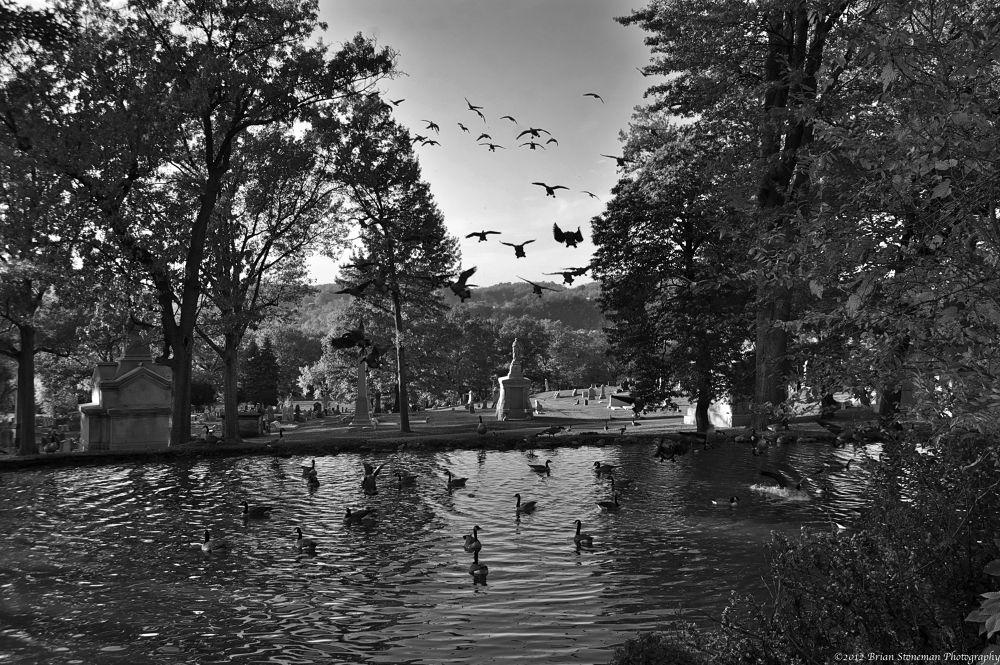Goose landing by stonerz68