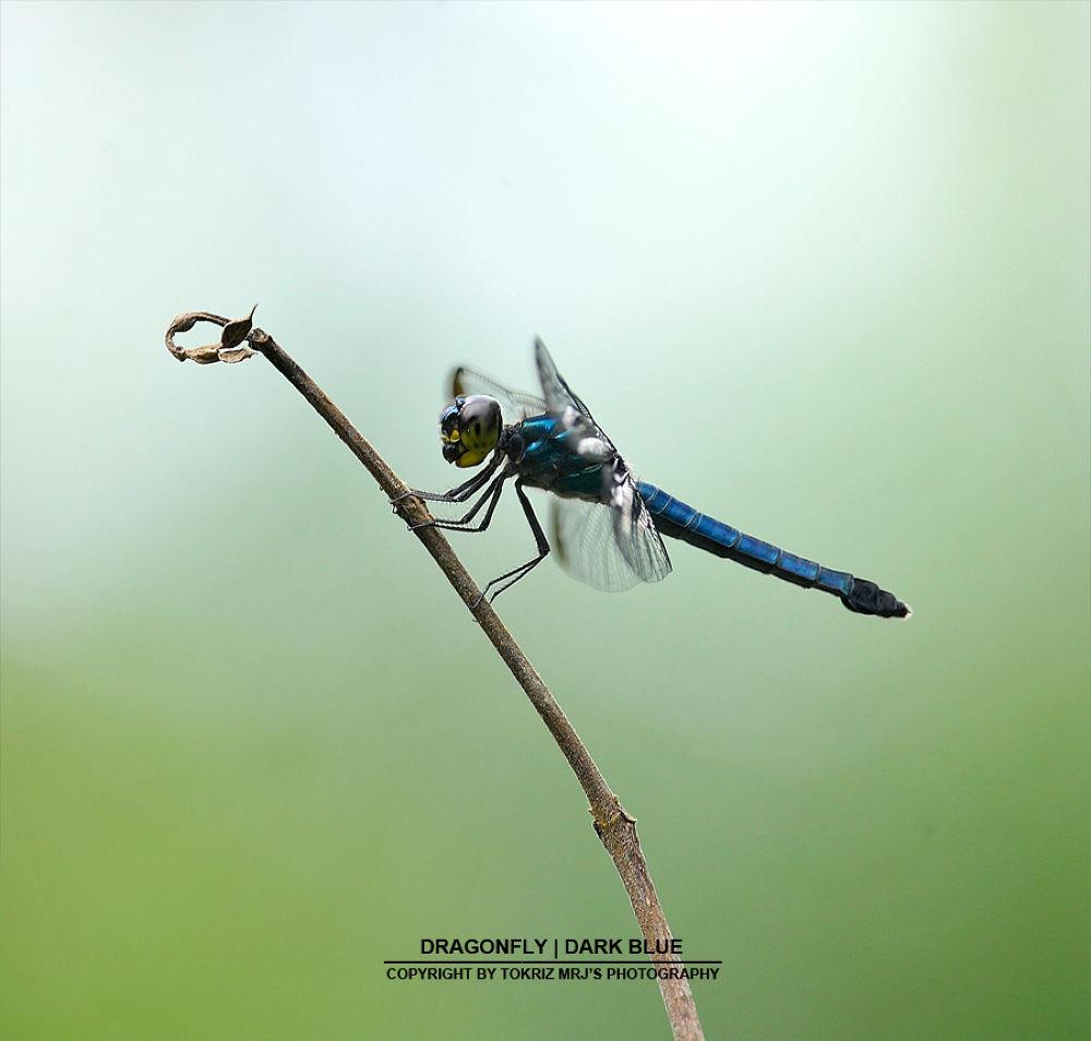 dragonfly4 by Mohd Ridhwan Jamian (TokRiz MRJ)
