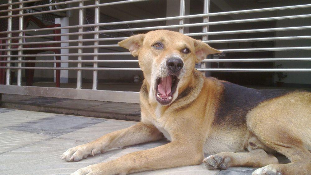 my Dog by mishalphotography