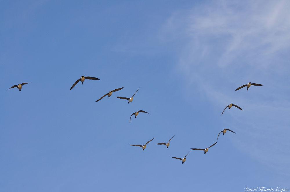 Flying free by davidmartinlopez