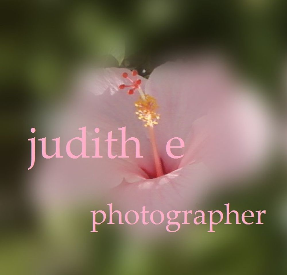 flower croppedphotogrpaher by JUDITH HORN