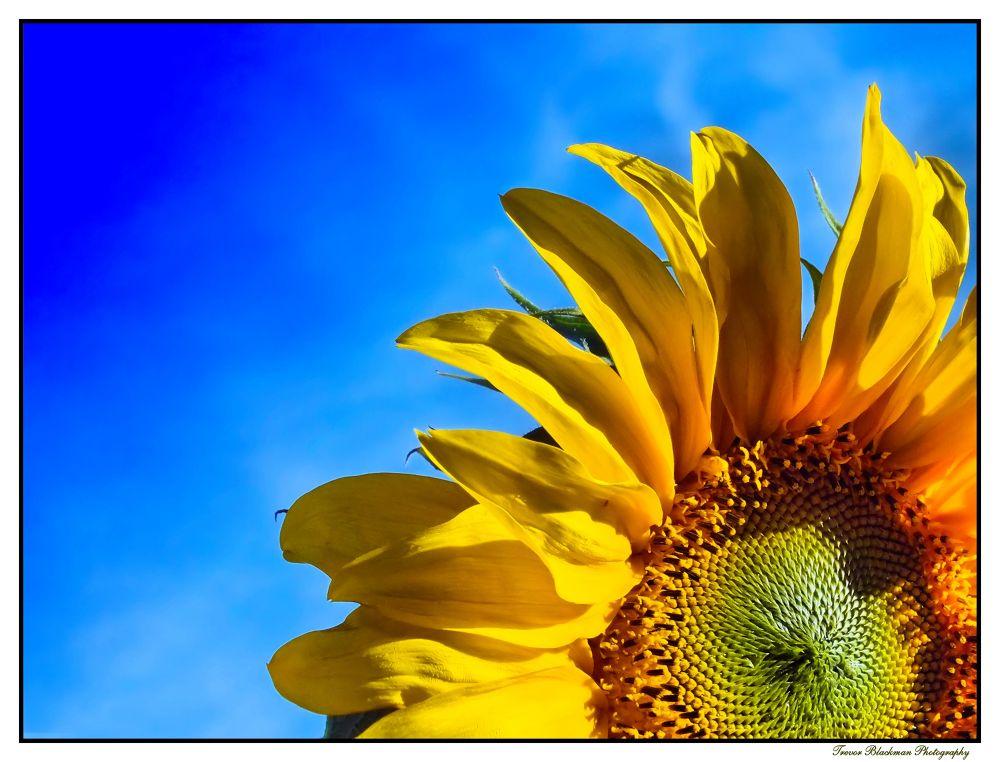 Memory of Summer... by HAWKWIND
