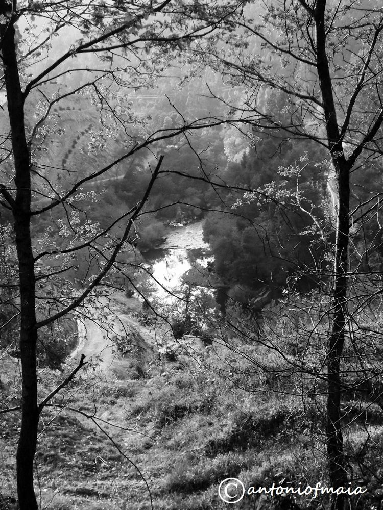 VOUGA beauty ... B&W WEB by Antonio F. Maia