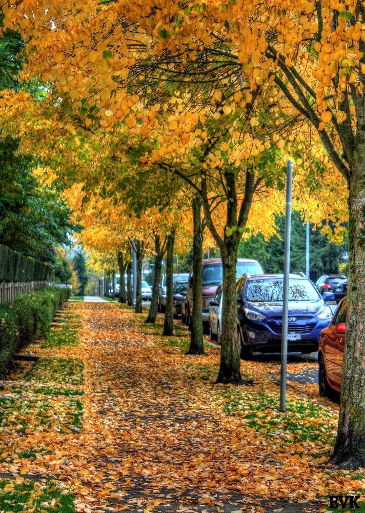 Sidewalk Dreamer 77~EVK by ErnieKasper