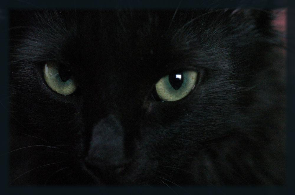 Crapule et ces yeux de Dragon... by photosdan