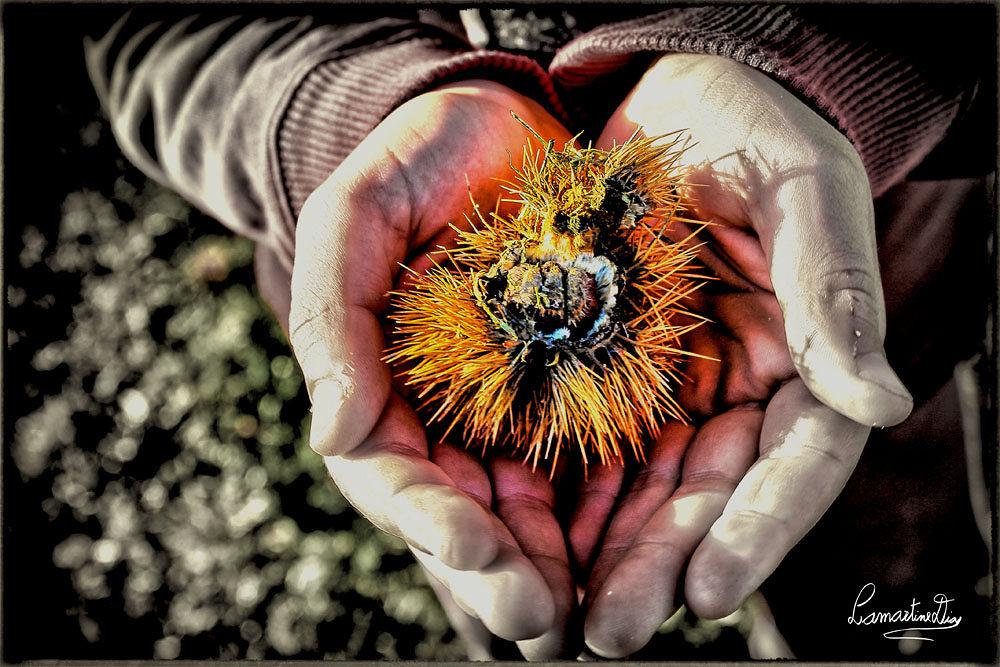 Chestnut by Lamartine Dias