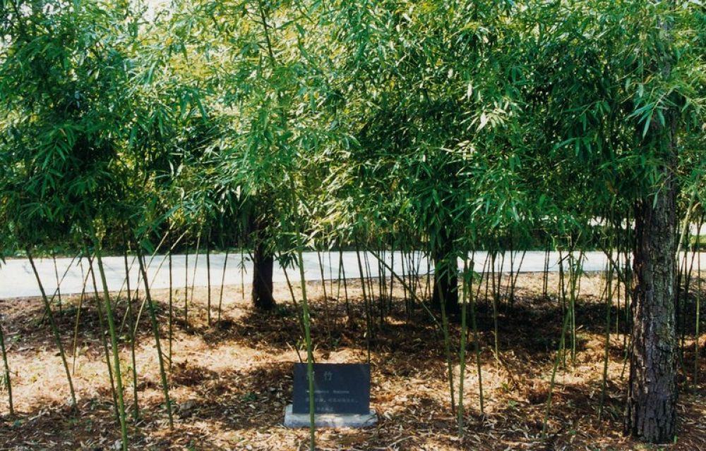 13.Zhejiang_Anji_Bamboo_Garden (Phyllostachys Flexcuosa) 1998-118 by Arie Boevé