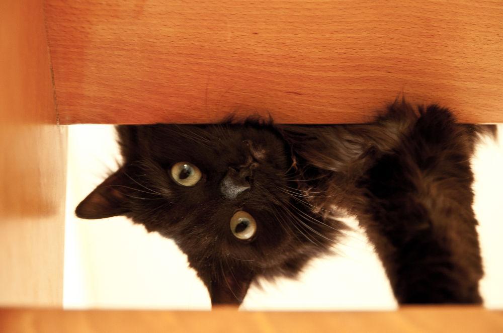 17052012-D2A_0031 L'escalier espace de jeux pour Crapule by photosdan