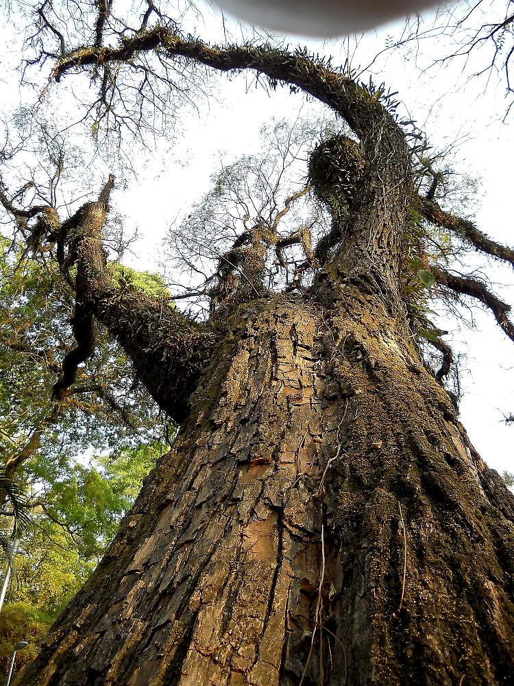 Formato da árvore que parece estar esticando os braços - Eduardo Andreassi by Eduardo Andreassi