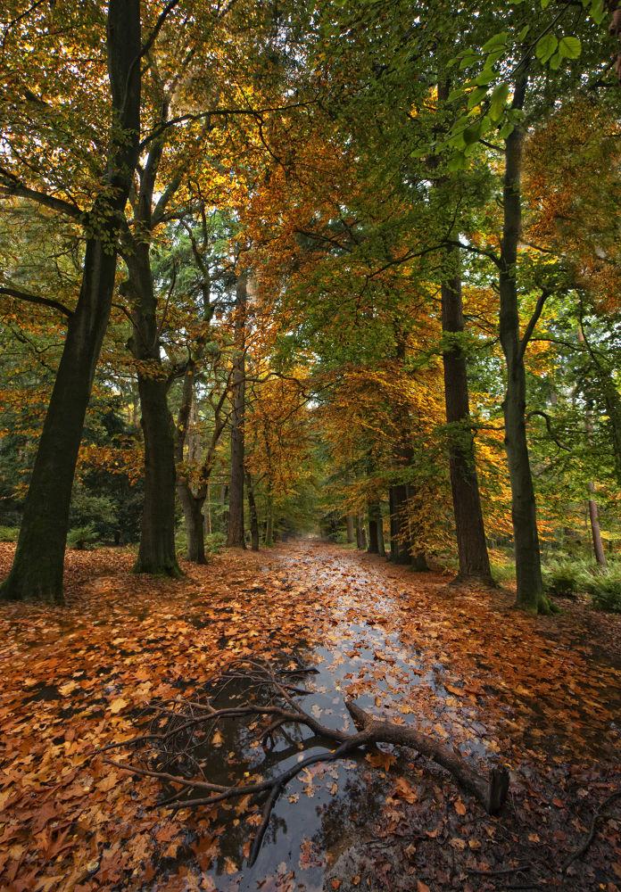 Dutch autumn by edgartossijn
