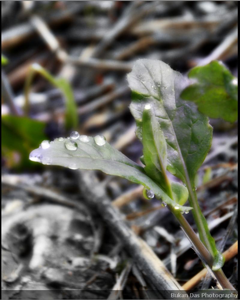 Foggy drops on leaf by BukanDas