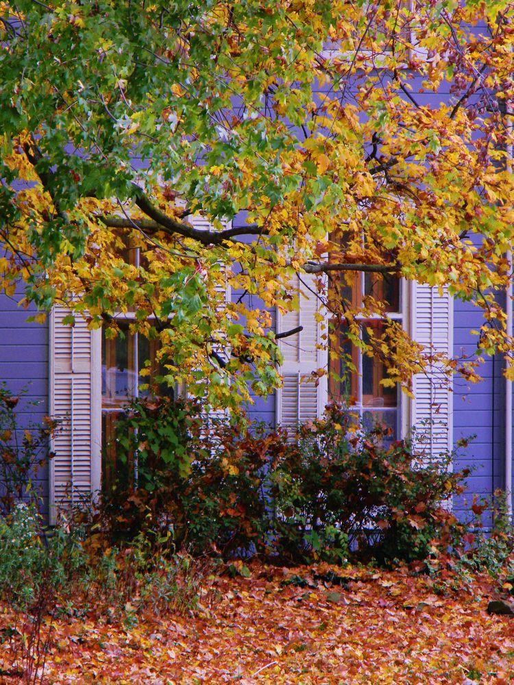 Photo in Random #autumn #ohio