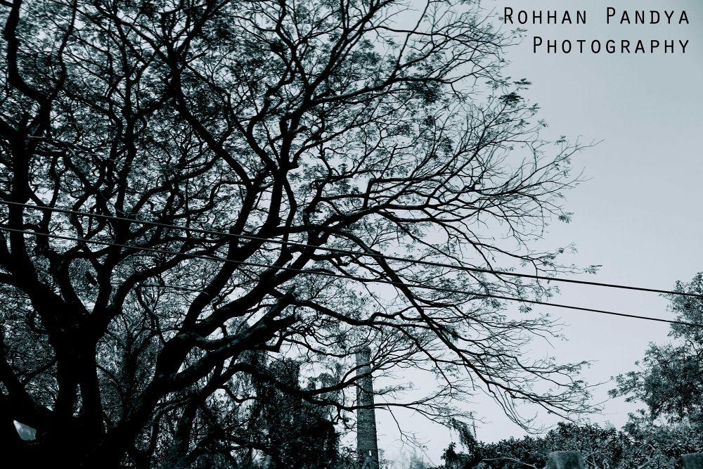 IMG_3631 by rohhanpandya