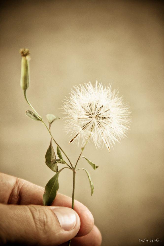 o vento levas as sementes by ThalitaEpitacio