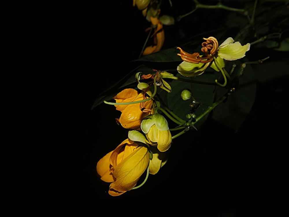 flower on black by Rui Oliveira Santos