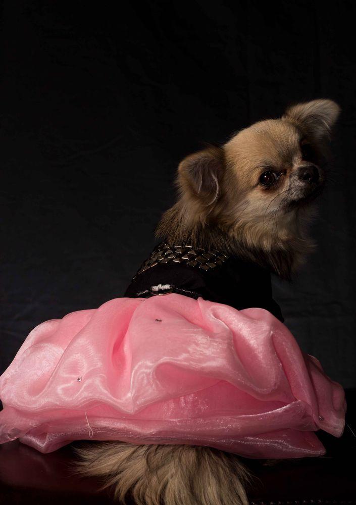 Handmade Black and Pink Dress/ Harness by PuppyCloset