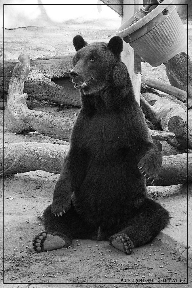 oso by AlejandroGonzalez