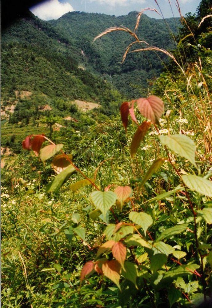 Xingdoshan_Forest_Hubei-122 by Arie Boevé