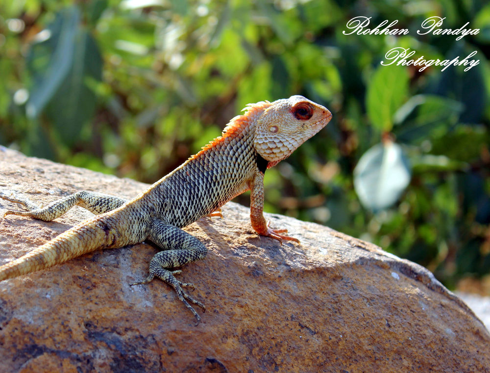 IMG_5298 by rohhanpandya