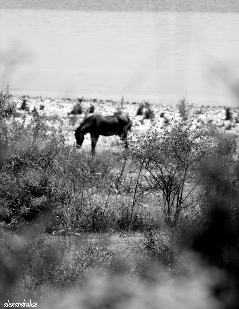the horse by alexandrasz
