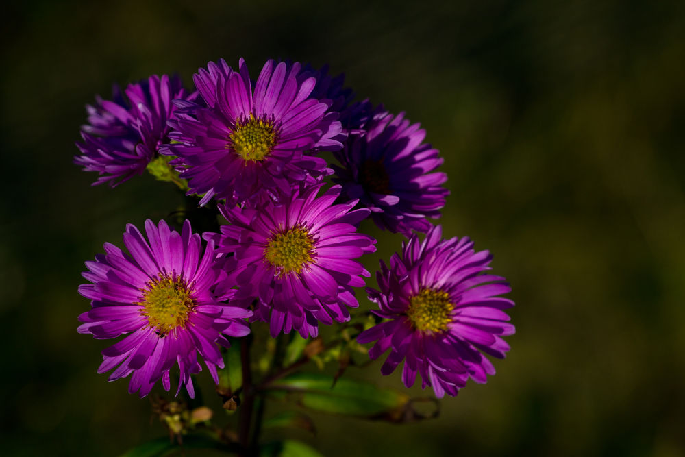 Pink Flowers by buttonmasher