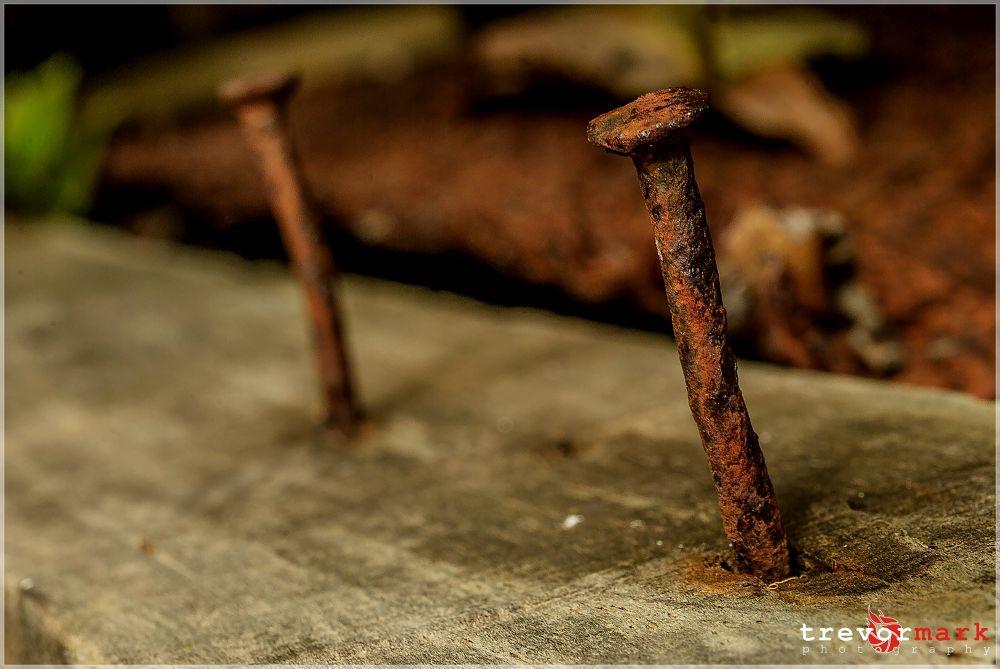 DSC_1645 by tmphoto