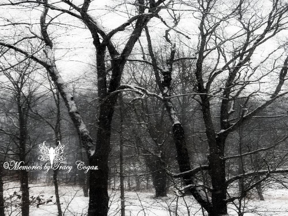 Snow day20 by cogarslionheads