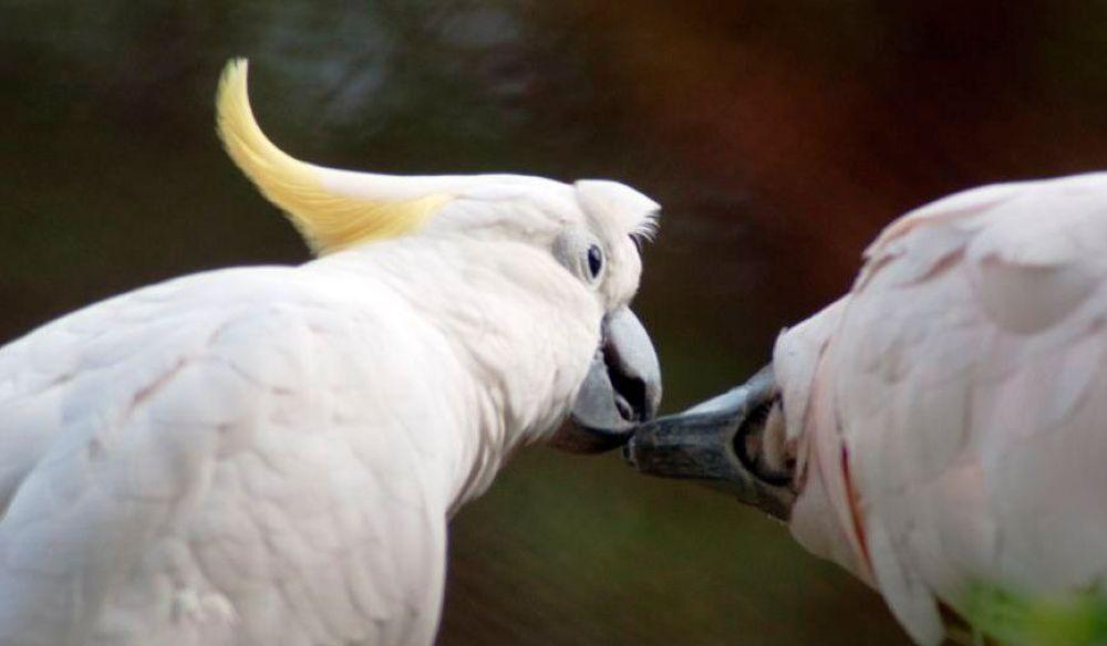 Romantic by saputrac