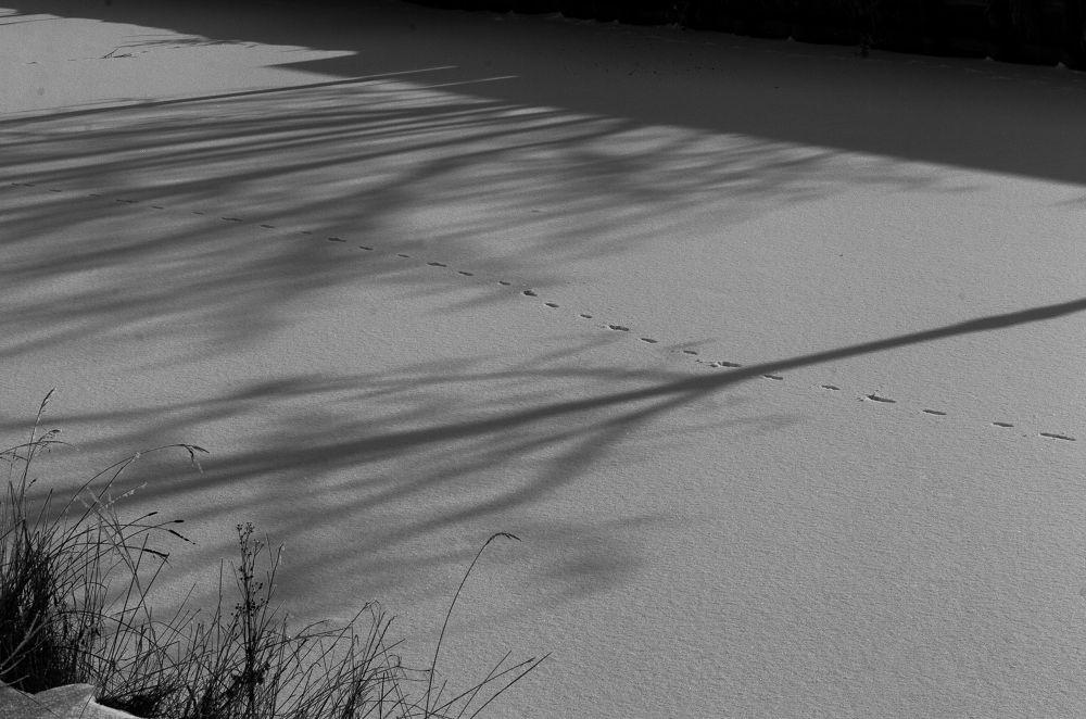 25012013-Hiver sur le canal de Roubaix by photosdan