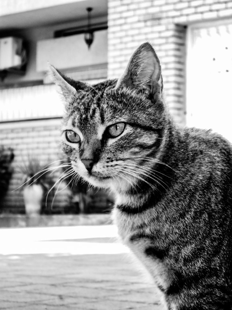 Photo 002 by boukhite