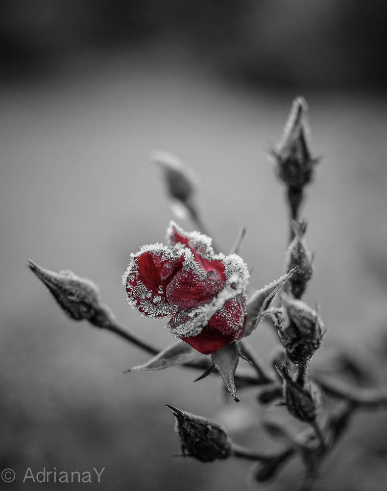 Frozen by AdiY