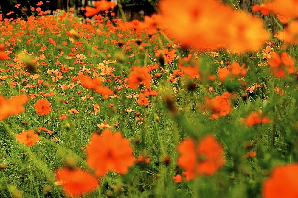 Flowery by guiacc
