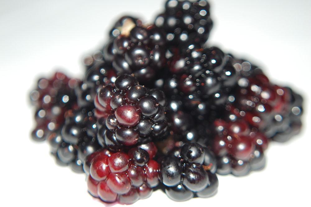 Photo in Food #blackberries #fruits #macro #zoom