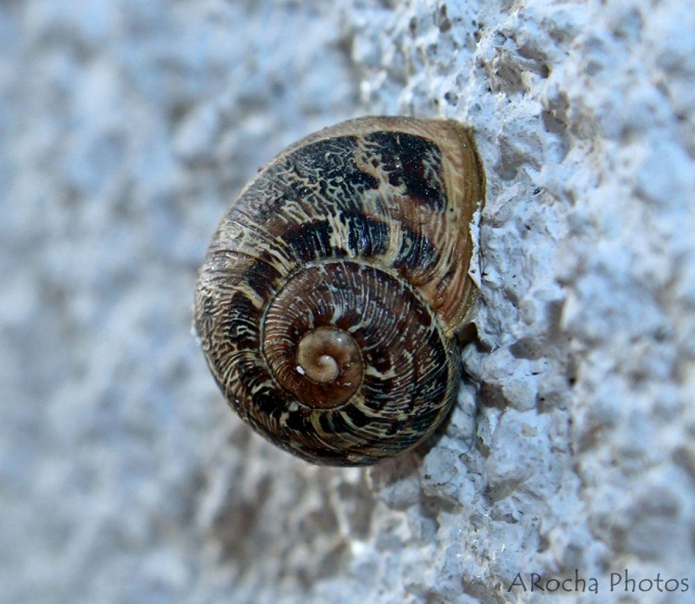 Snail by AROCHA